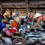 Freshly unloaded seafood at Hoi An market