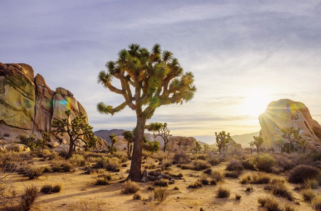Get Outdoors in Greater Palm Springs