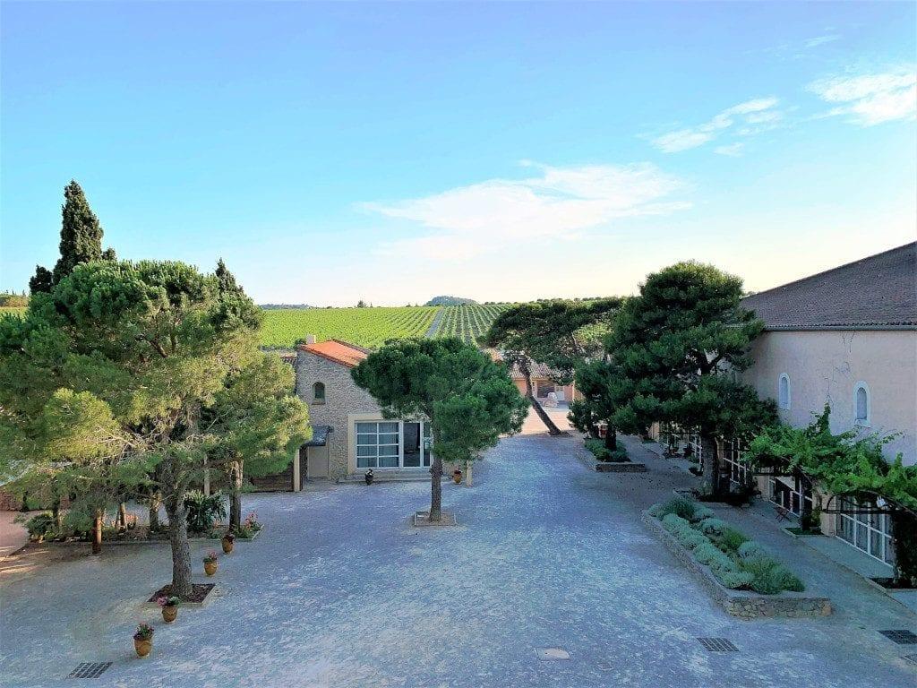 Languedoc Wine