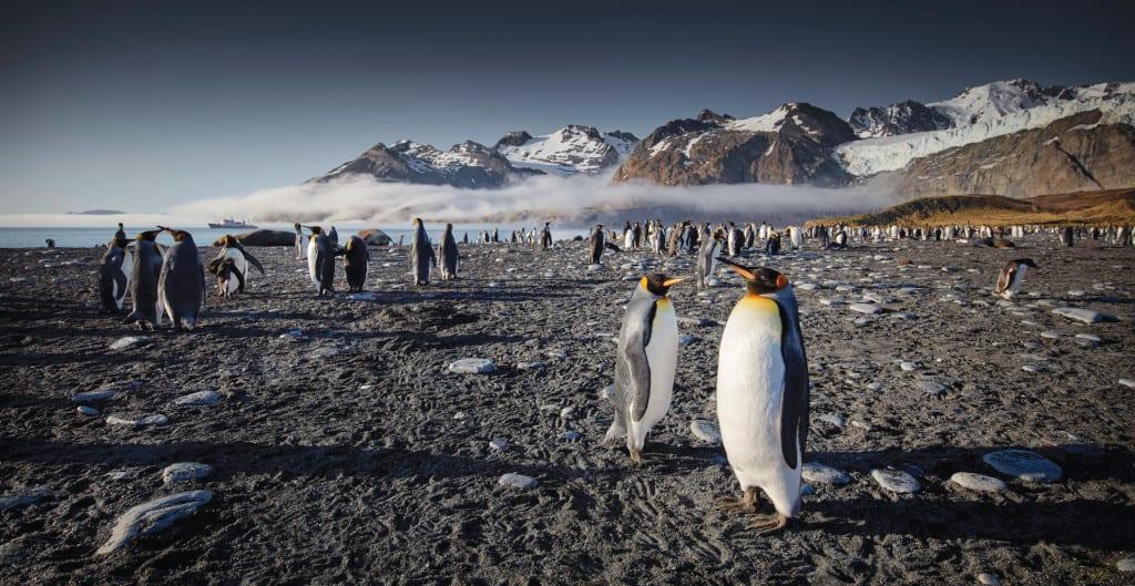Join Chris Bonnington on an Antarctic Odyssey