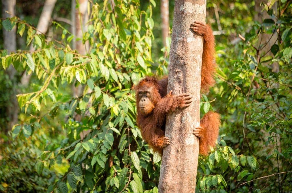 Follow Judi Dench's Footsteps in Borneo