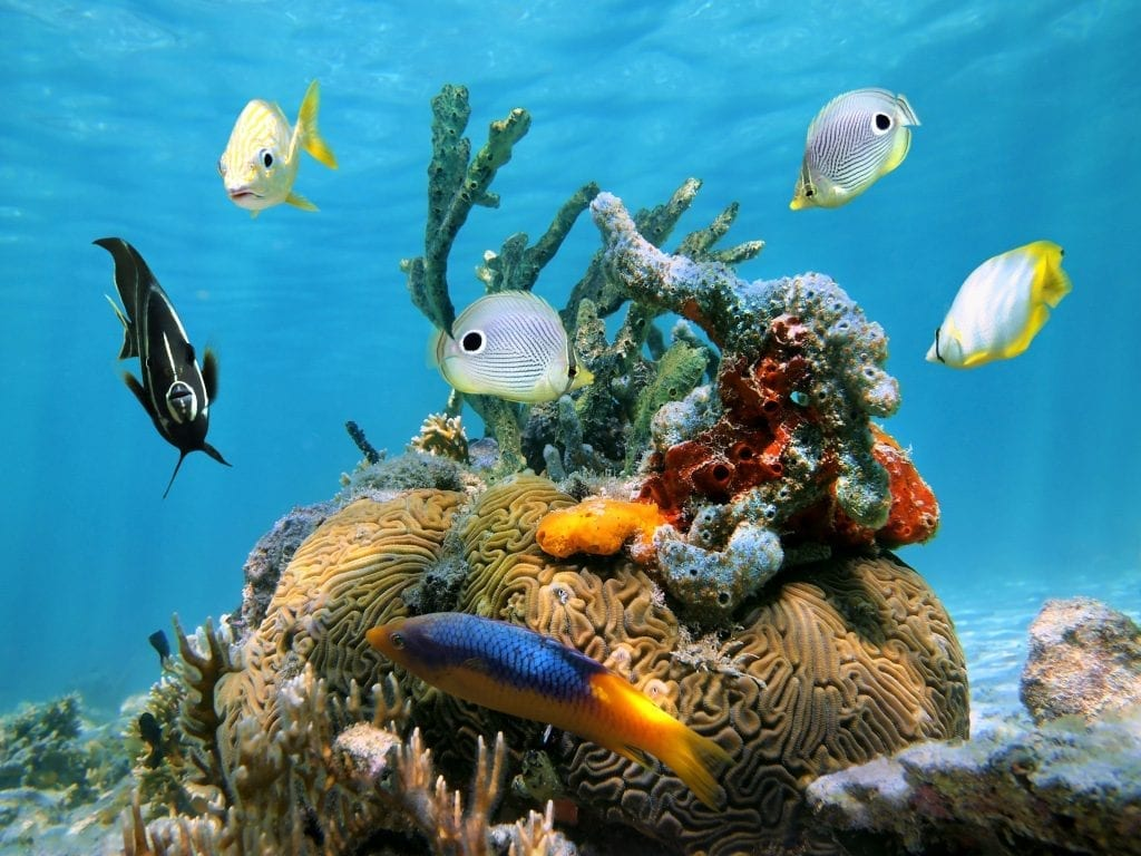 Make sure you where the right sunscreen when swimming amongst coral.