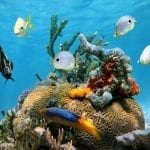 Efforts to Protect the Mesoamerican Reef