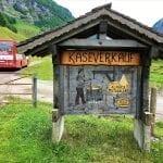 The Swiss cheese dairy
