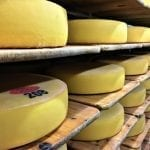 Swiss cheese maturing at the cheese dairy