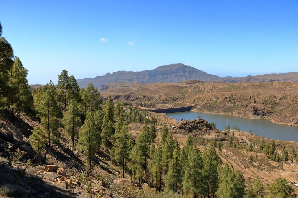 Pine forest in the interior of Gran Canaria
