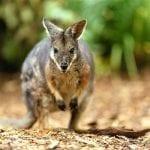 Luxury Eco-Retreat Opens at Sydney's Taronga Zoo