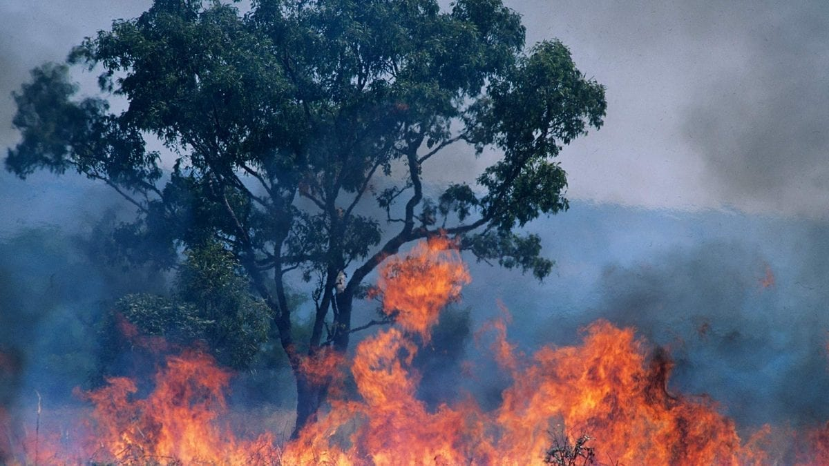 Australia Bush Fires Set to Continue