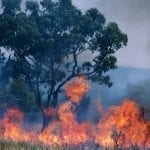 Australia Bush Fires Set to Continue