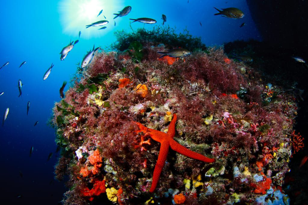 The Save Posidonia Project is campaigning to preserve Formentera's eco-system