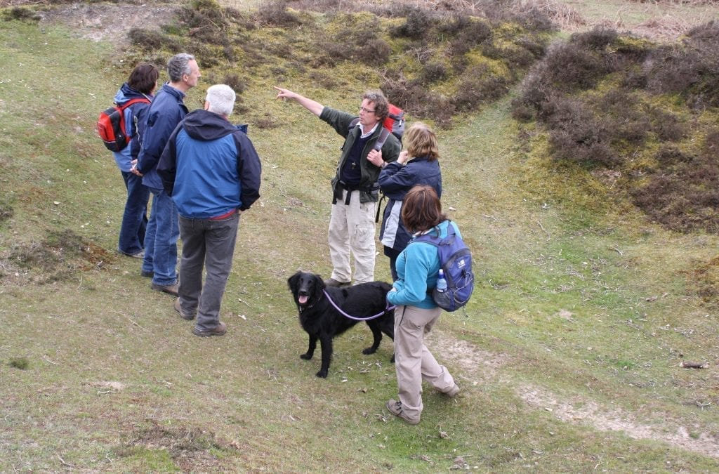 Enjoy the New Forest Walking Festival
