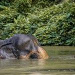 Ethical Feeding: Phuket Elephant Sanctuary