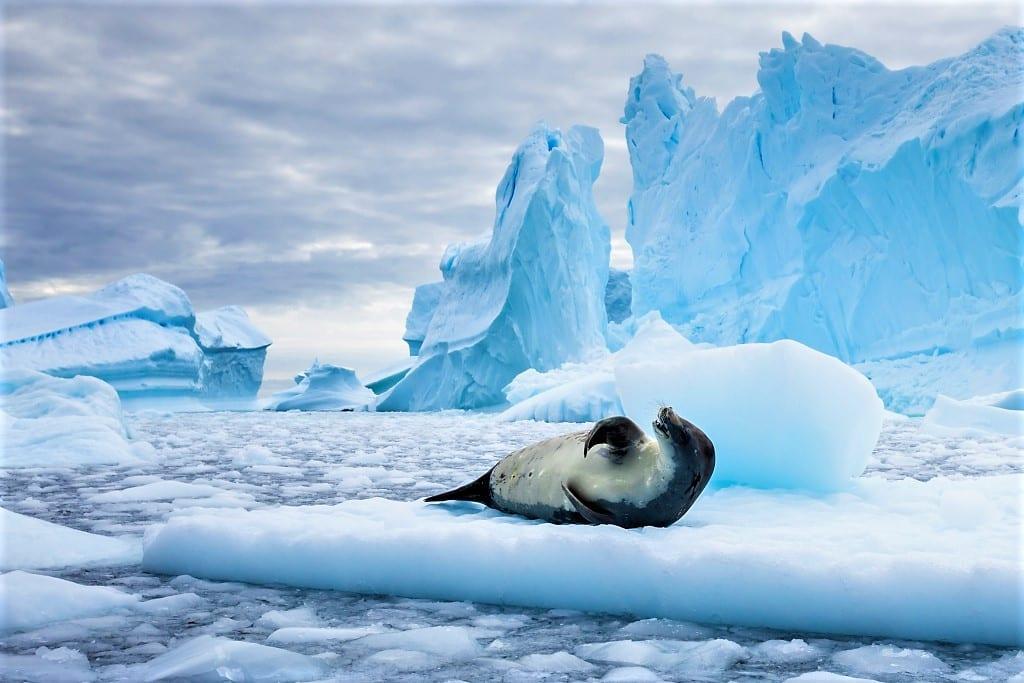 Crabeater Seal, Antarctica shutterstock_1094243873