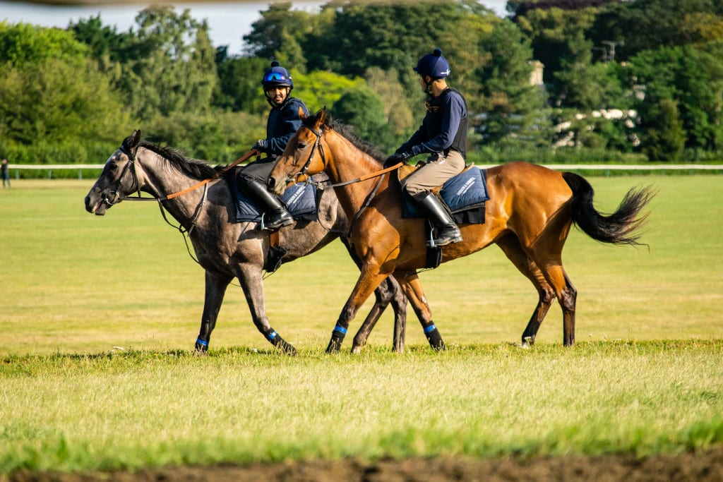 Discover Newmarket Gallops & Stud