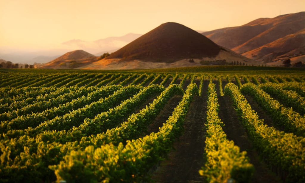 Think Outside the Box on a California Wine Trip