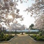 Spring blossoms at Blenheim