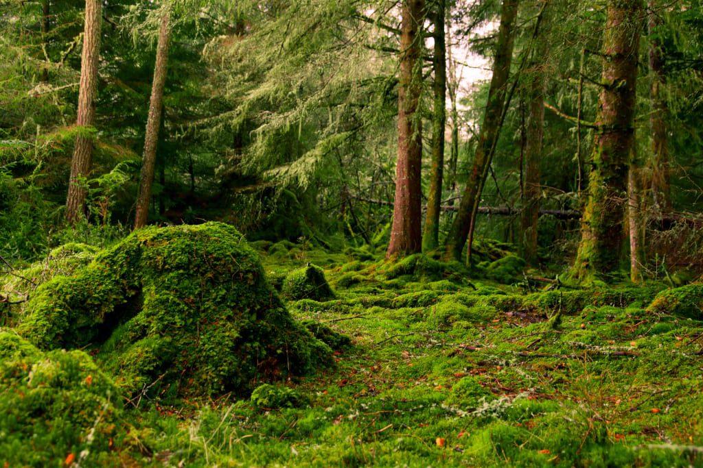 Woodland on Eilean Shona by B Cox