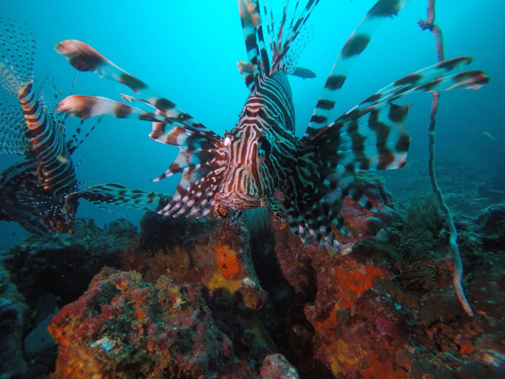 Some of the amazing marine live in the Mergui Archipelago