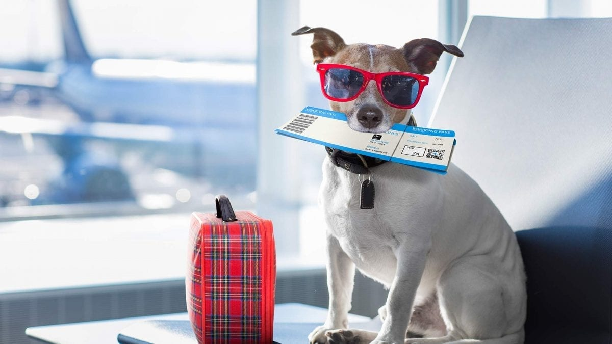 Airlines to Ban Emotional Support Animals?