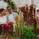 Visitors look at the Hampshire Carnivorous Plants exhibit in the Great Pavilion, RHS Chelsea Flower Show 2019. Musicians perform for visitors at the RHS Chelsea Flower Show Gala 2019. c. RHS / Georgi Mabee