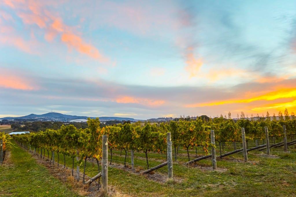 Sunset at Swinging Bridge Wines, Orange.