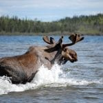 Top Five New Experiences in Manitoba