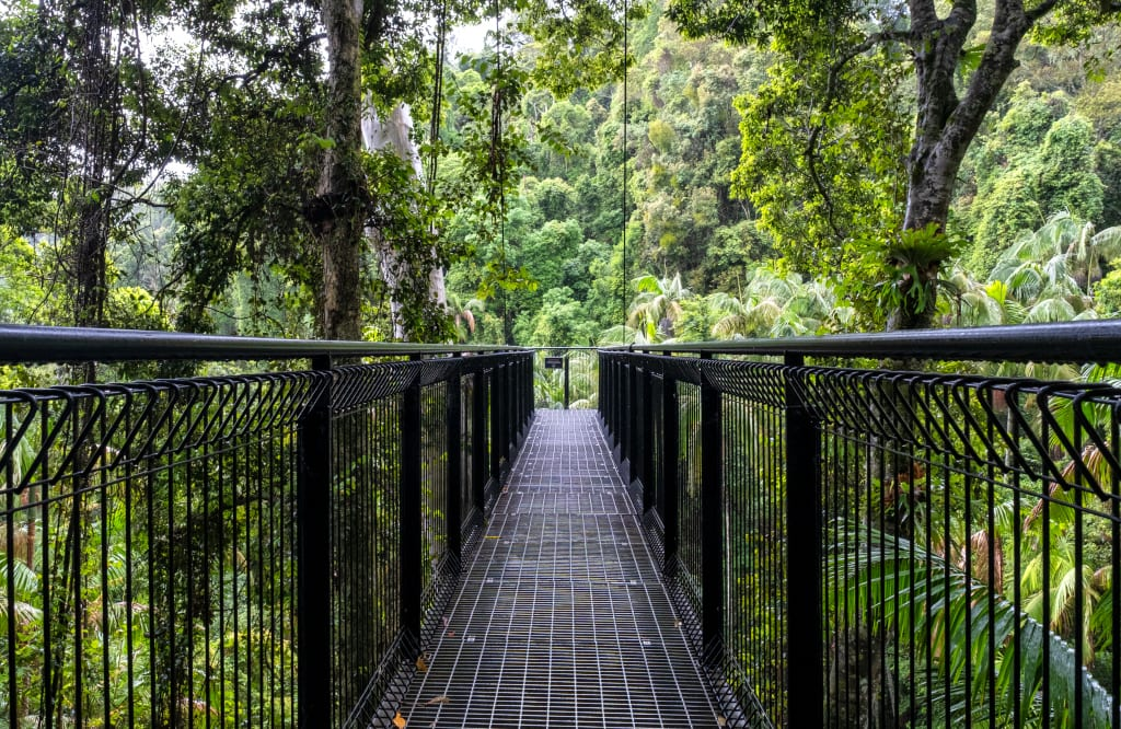 Tamborine Mountain Rainforest Skywalk tamborine mountain