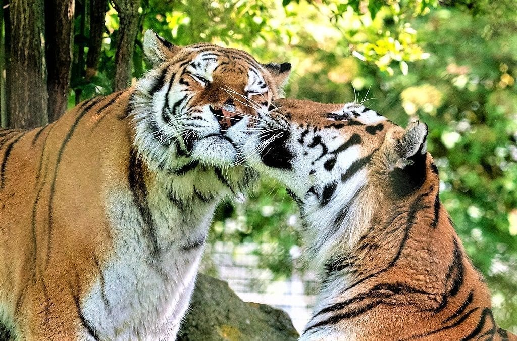 Help Support Marwell Zoo's Animals