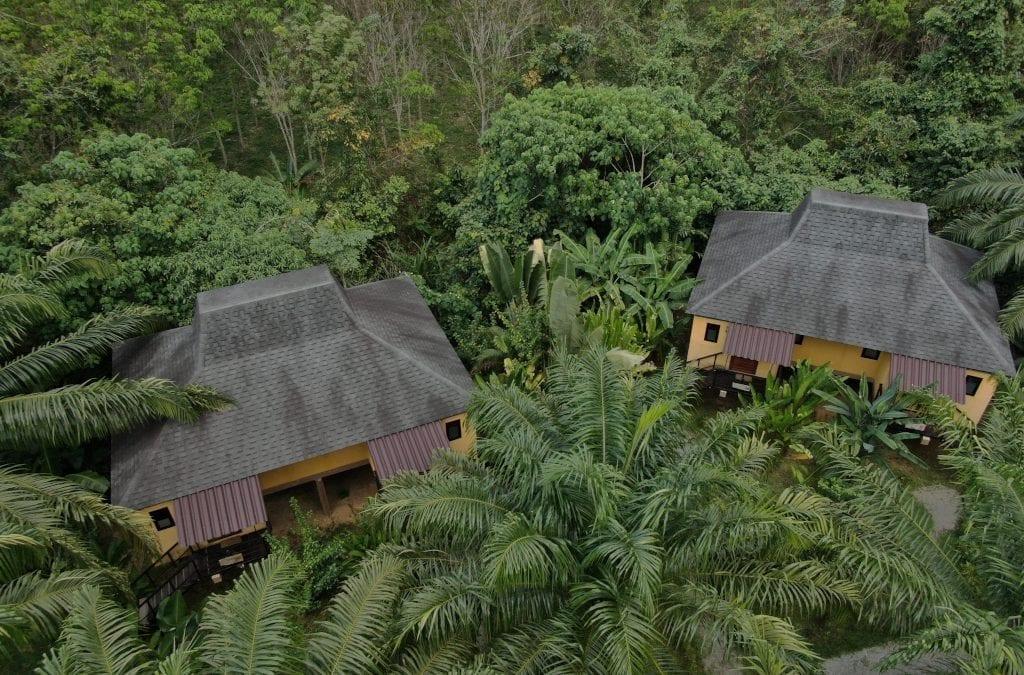 Anurak Rainforest Rising Tree Programme