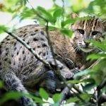 Ecotourism: Cambodia Wildlife Under Threat