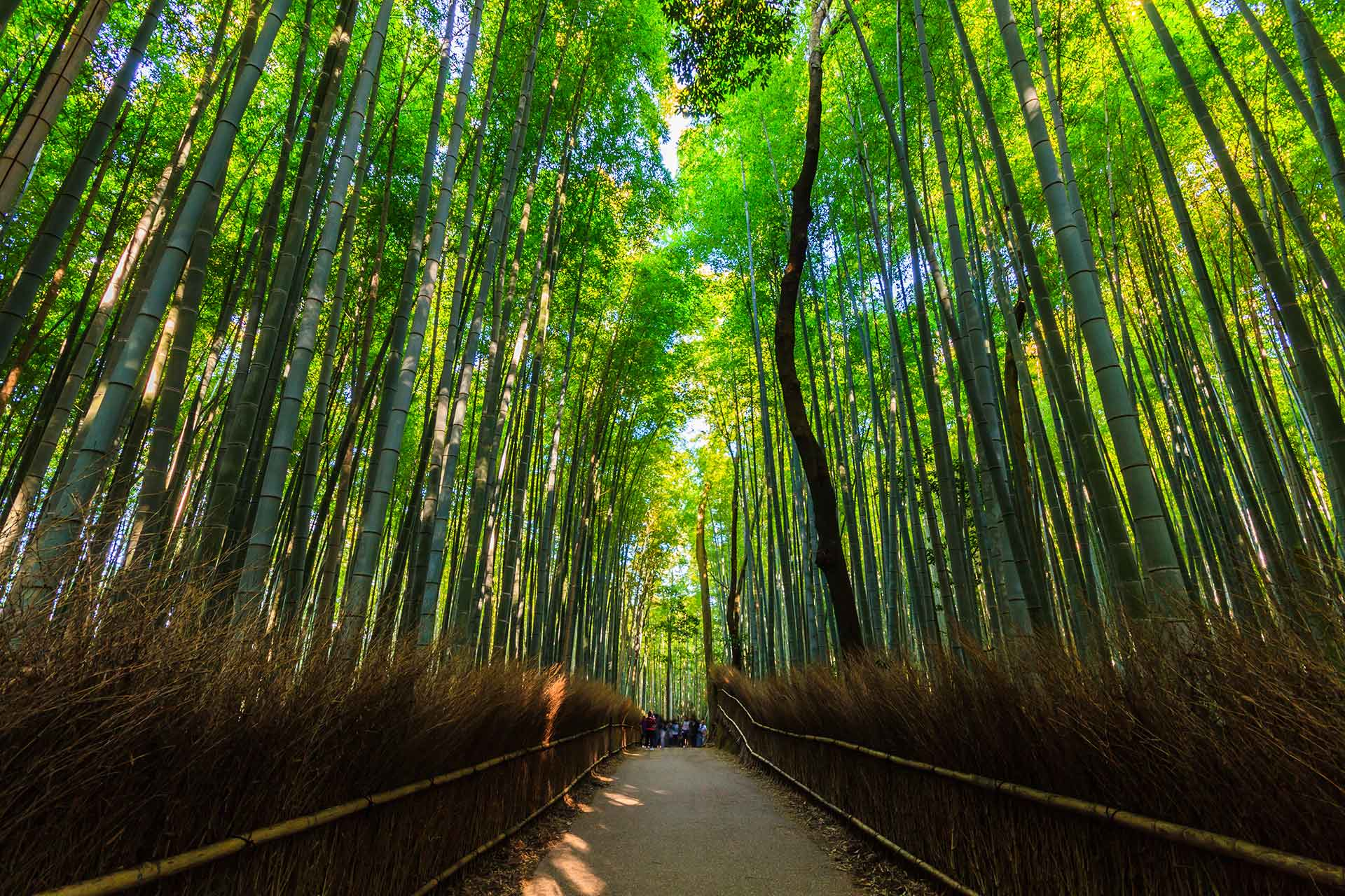 Arashiyama bamboo groves, one of the best natural sites to visit in Japan