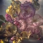 Up Close with Nick Knight Roses From My Garden
