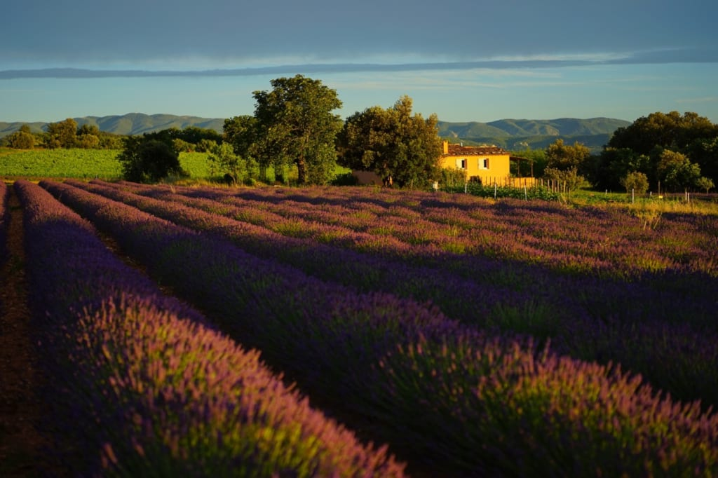 Provence @ Tailor Made Rail