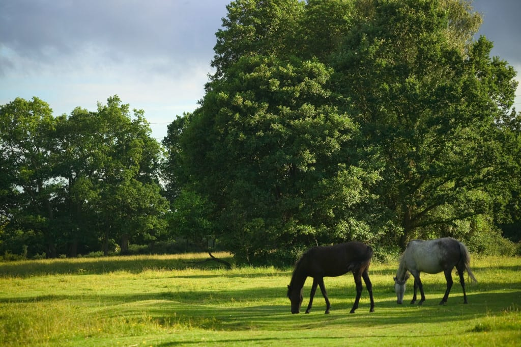 Is the New Forest the perfect UK summer staycation?
