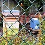 Bee hives produce local honey