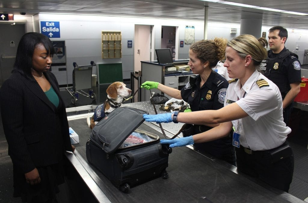 Helsinki Trials Airport COVID-19 Sniffer Dogs