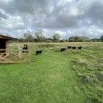 Apacas and Shetland sheep at Houghton Lodge