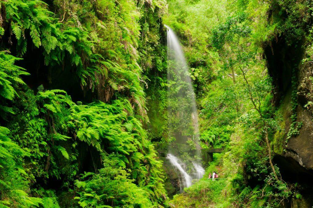 Los Tilos Forest - La Palma