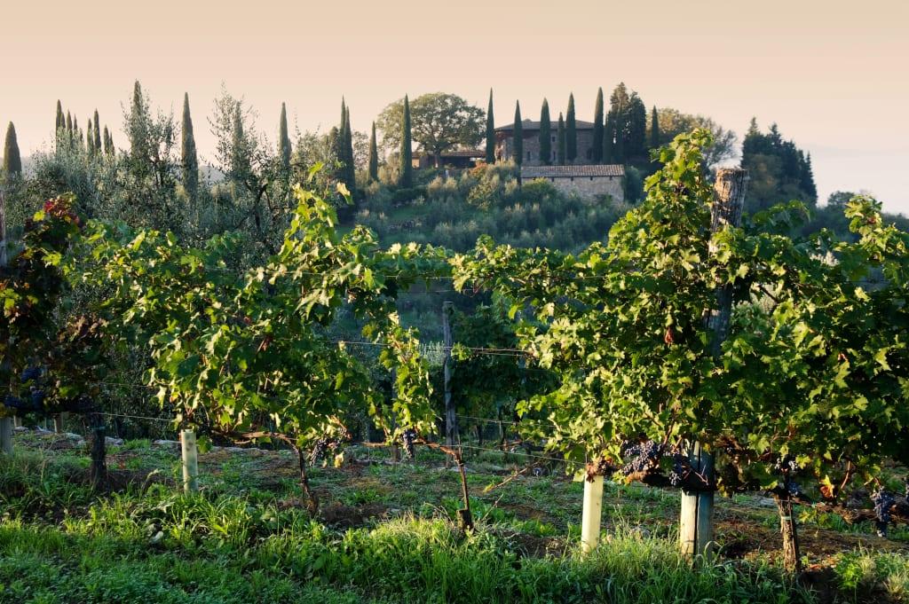 Gagliole Vineyards