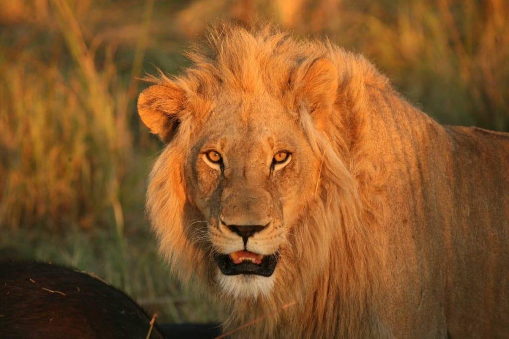 Rewilding and Regenerative Travel
