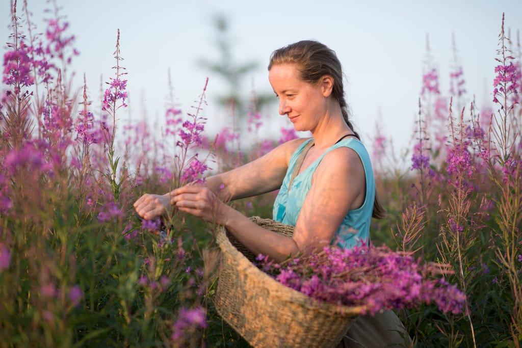 Lori McCarthy foraging and harvesting are key to sustainable tourism