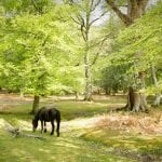 New Forest Book Direct Campaign Launched