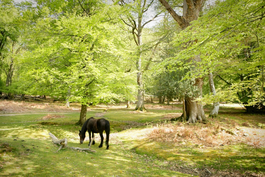 New Forest Spring