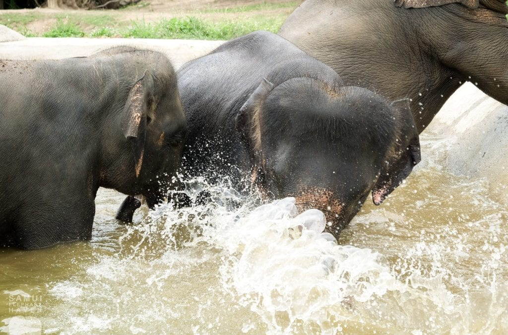 Meliá Koh Samui Supports Samui Elephant Haven