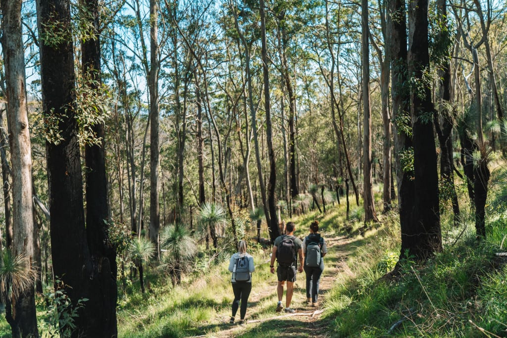 Guided nature walk along Spicers Scenic Rim Trail