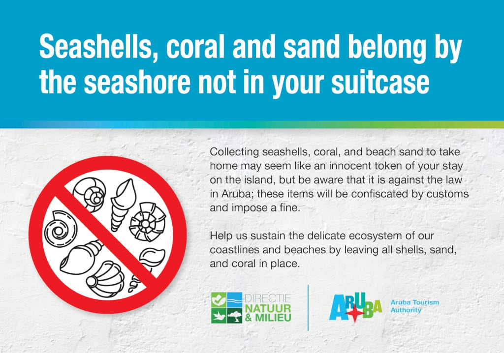aruba sea shells
