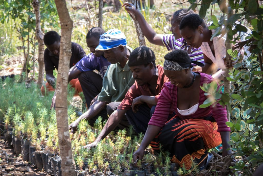 Temwa Tree Planting