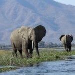 AWF Announces Extended Virtual Safaris