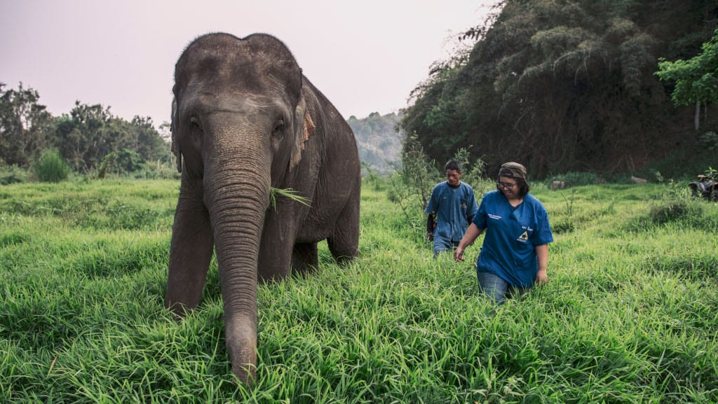 Anantara Golden Triangle Elephant Camp & Resort - Dr Nissa with Giant (1)