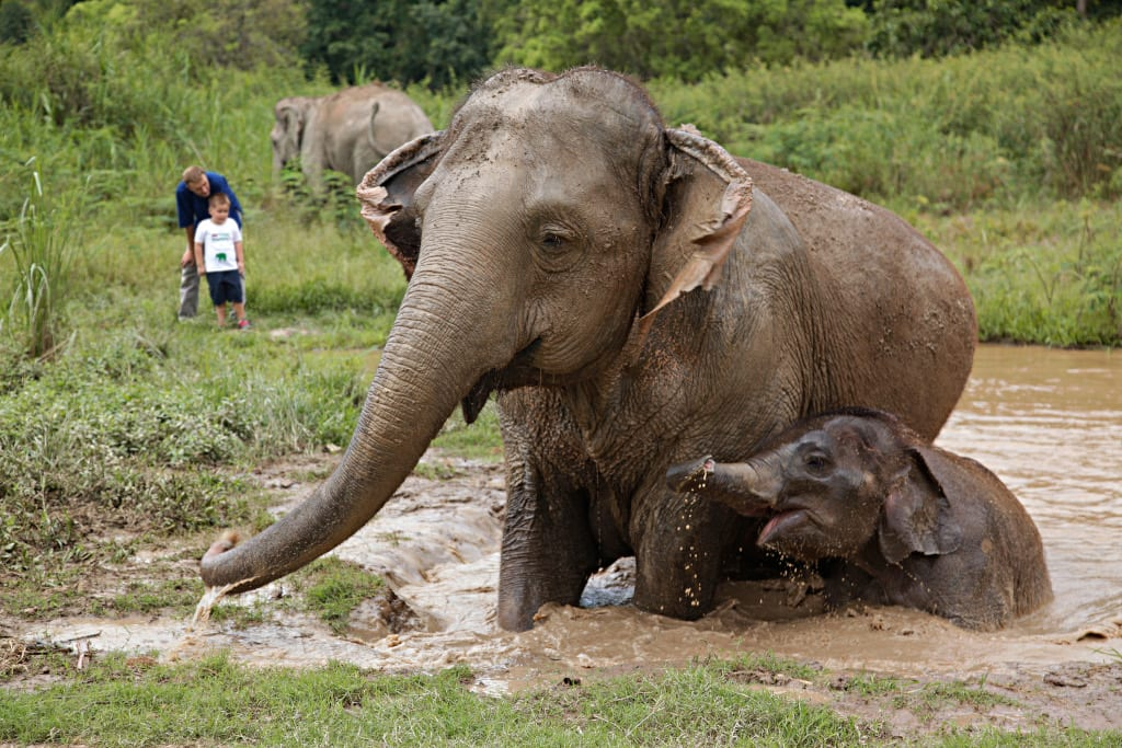 Anantara Golden Triangle Elephant Camp & Resort - Walking with Giants Experience